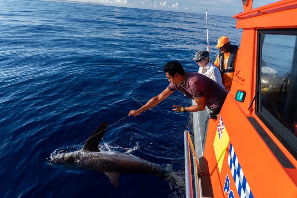 The first stage of the shark research catch and release tagging program ended last week.  The team comprising experts from the University of Hawaii, Australian Institute of Marine Science, Oceans…