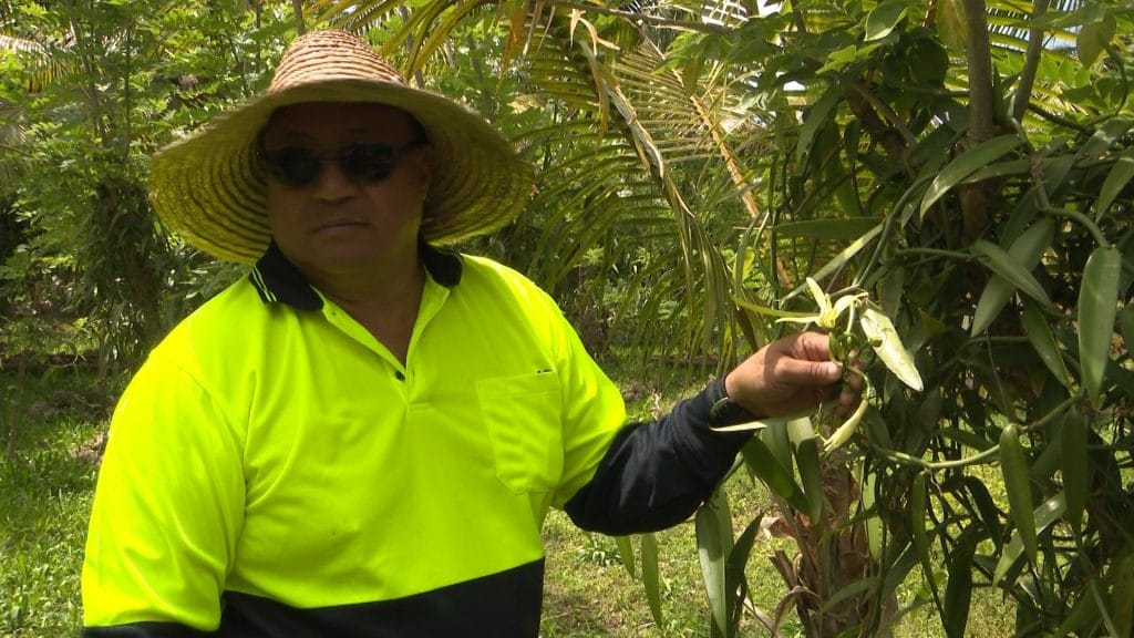 Niue Vanilla International has expanded its export markets – the latest being Russia.BCN News caught up with Niue Vanilla Owner Stan Kalauni at his 3 acre farm in Hakupu where the…